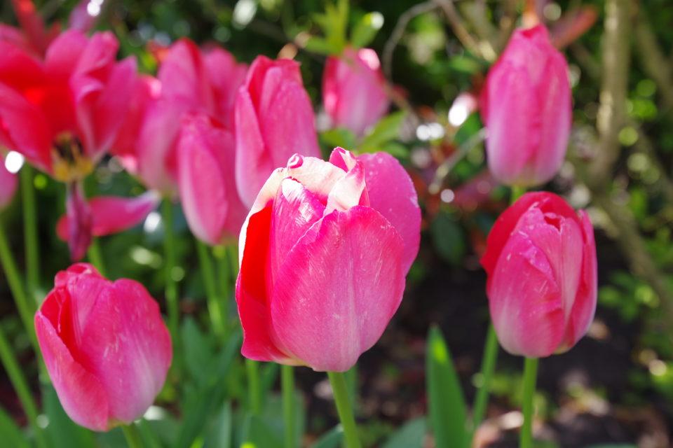 Kristins Gartenblog